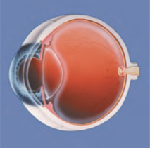 Gesundes Auge klare Linse
